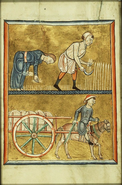 August: people reaping corn, gleaning, harvesting