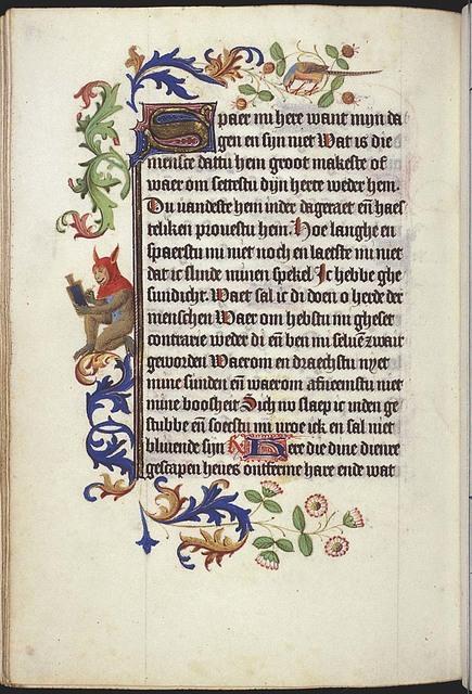 Simia/Ape with hood with the ears of an ass (fool?) writing