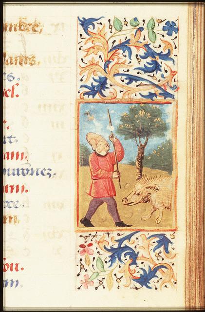 November: a man knocking acorns out of an oak-tree
