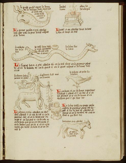 Constellation: Canis Minor (Anticanis)
