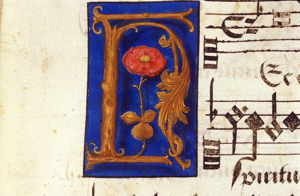 Red rose from BL Royal 11 E XI, f. 13v