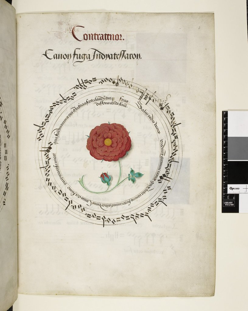 Red rose from BL Royal 11 E XI, f. 3