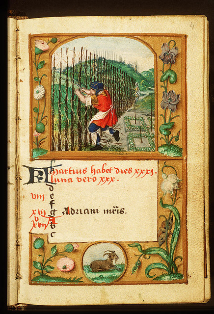 March: a man pruning vines