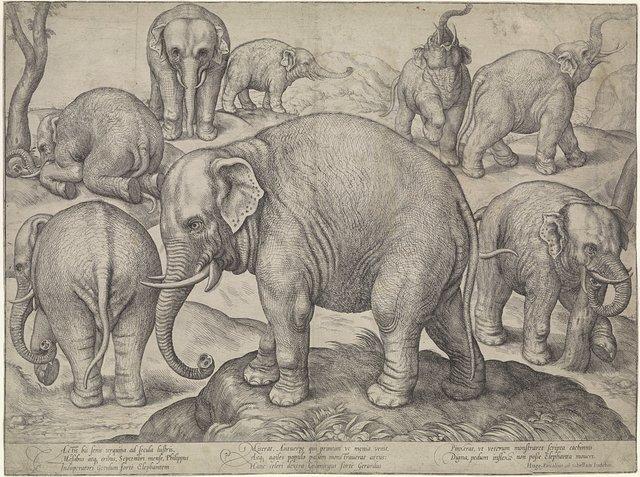 Acht olifanten