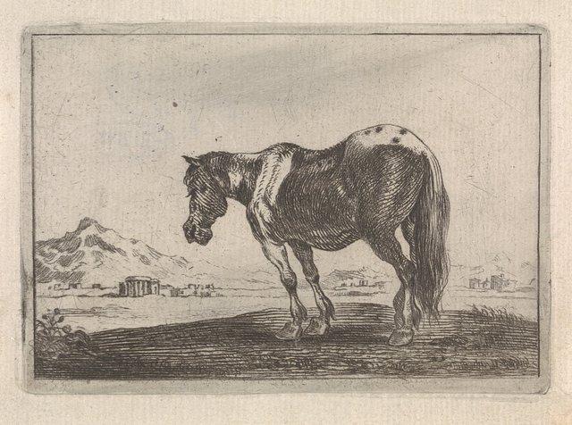 Paard staande in een landschap