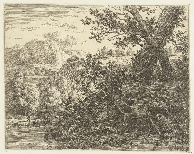 Landschap met boom met blootgelegde wortels