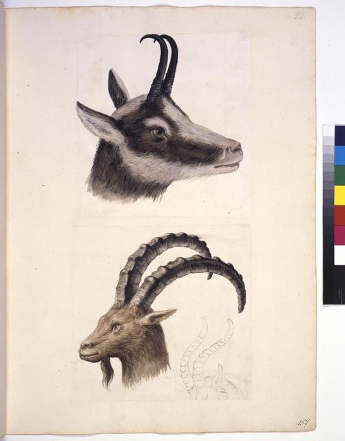Cod. Min. 42, fol. 20r: Sammlung von Naturstudien u. a. von niederländischen, deutschen und italienischen Künstlern