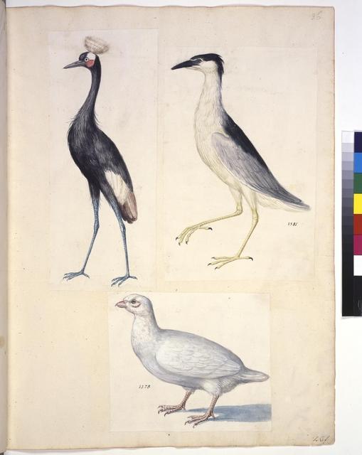 Cod. Min. 42, fol. 36r: Sammlung von Naturstudien u. a. von niederländischen, deutschen und italienischen Künstlern