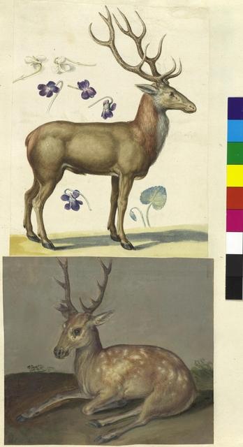 Cod. Min. 42, fol. 9r: Sammlung von Naturstudien u. a. von niederländischen, deutschen und italienischen Künstlern