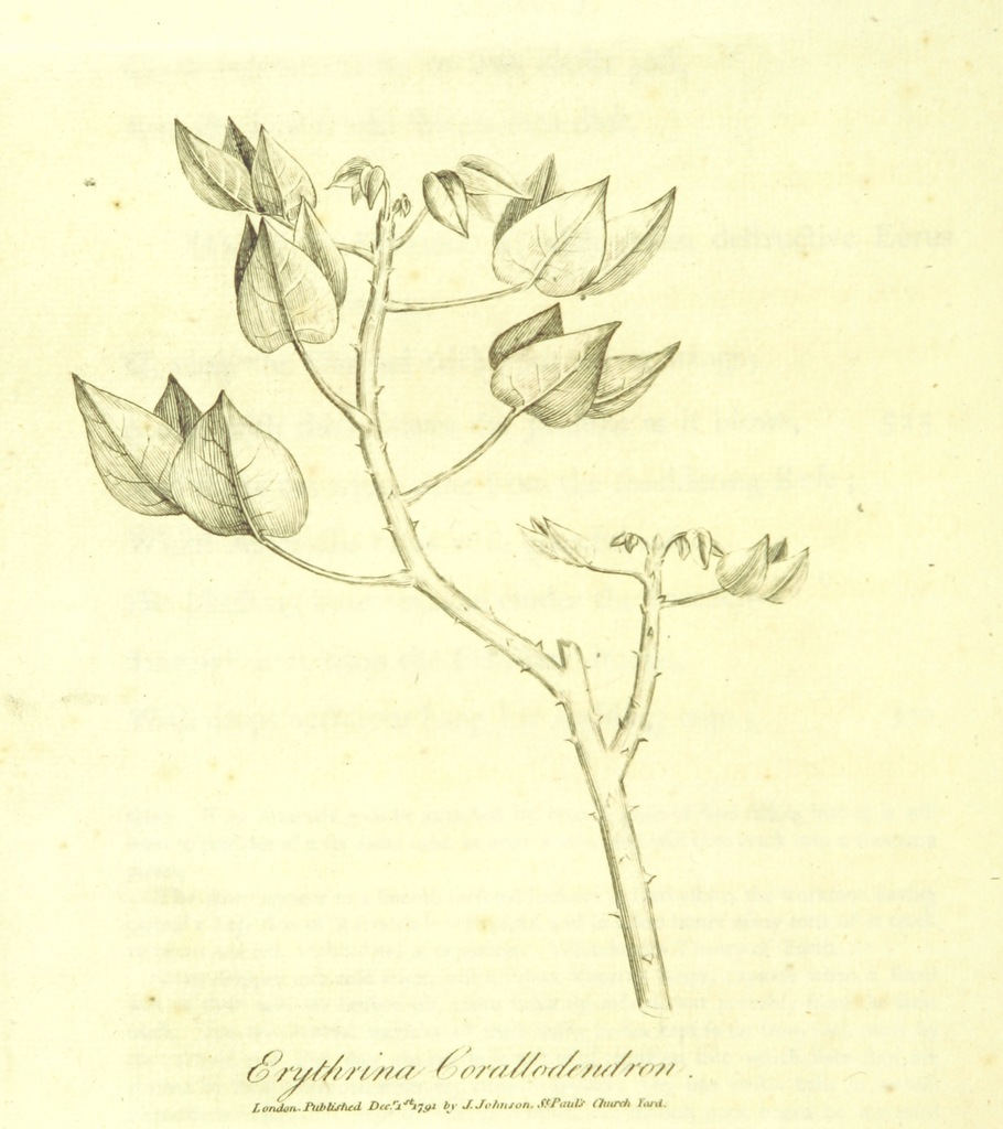 "flora from ""The Botanic Garden; a poem, etc. [By Erasmus Darwin, the Elder.] (Part I. The second edition.-Part II. The third edition.)"""