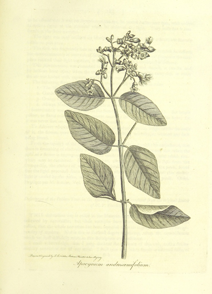 """flora from """"The Botanic Garden; a poem, etc. [By Erasmus Darwin, the Elder.] (Part I. The second edition.-Part II. The third edition.)"""""""