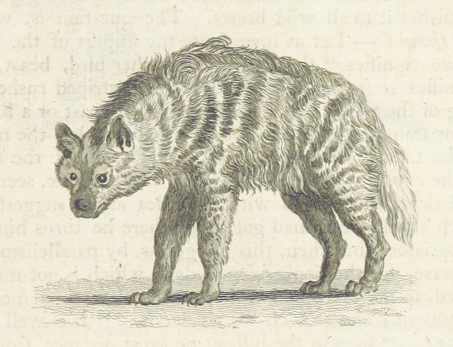 """hyena from """"The Conspiracy of Kings ... The second edition"""""""