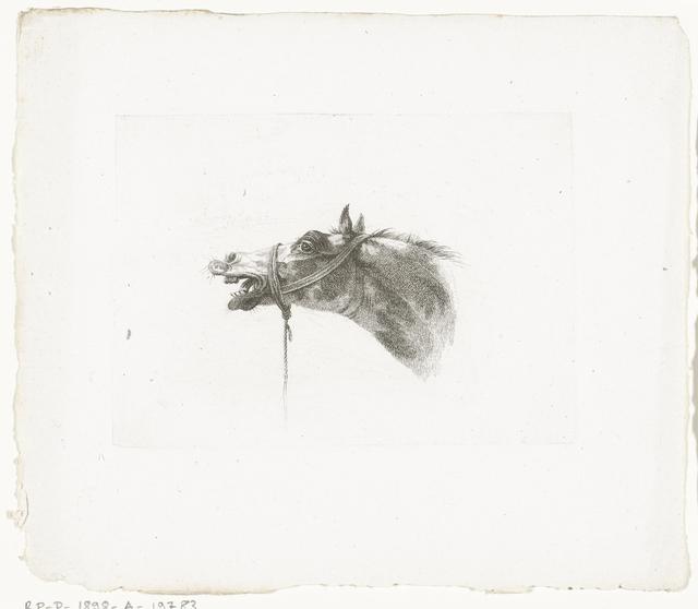 Paardenhoofd met open bek, naar links