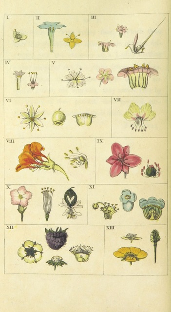 """flora from """"The Poetical Works of Erasmus Darwin ... Containing the Botanic Garden ... and the Temple of Nature. With philosophical notes and plates"""""""
