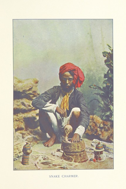 "cobra from ""Typical Pictures of Indian Natives: being reproductions from specially-prepared hand-coloured photographs. With descriptive letterpress by F. M. Coleman"""