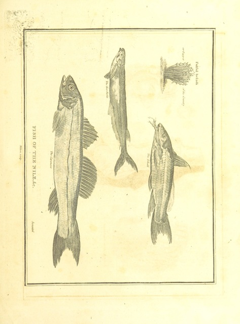 """fauna from """"The Voyages and Travels of Capt. Cook, Mungo Park, La Perouse, and others; ... with a ... geographical description of the World. Embellished with ... engravings and maps. (The World or the present state of the Universe. ... Vol. II.)"""""""
