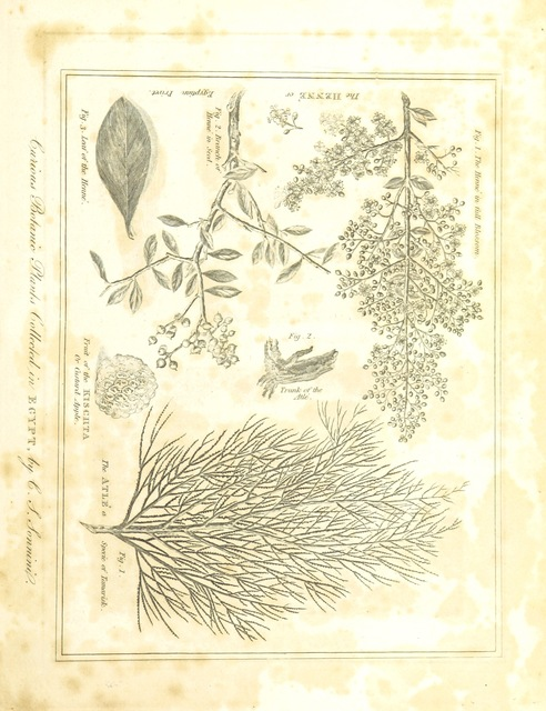 """flora from """"The Voyages and Travels of Capt. Cook, Mungo Park, La Perouse, and others; ... with a ... geographical description of the World. Embellished with ... engravings and maps. (The World or the present state of the Universe. ... Vol. II.)"""""""