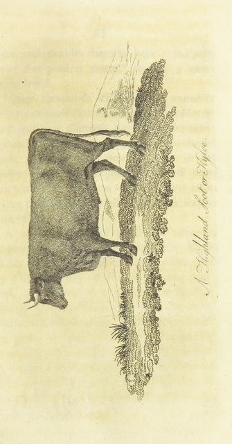 "kyloe from ""Observations on the breeding and management of Neat Cattle; together with a description of the diseases to which they are liable, etc"""