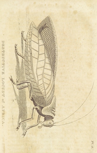 """insect from """"[An Authentic Narrative of the loss of the American Brig Commerce, wrecked on the Western Coast of Africa, in the month of August 1815. With an account of the sufferings of her surviving officers and crew, ... and observations historical, geographical, etc.]"""""""