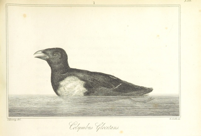 """fauna from """"Greenland, the adjacent seas, and the North-West Passage to the Pacific Ocean, illustrated in a voyage to Davis's Strait, during the summer of 1817"""""""