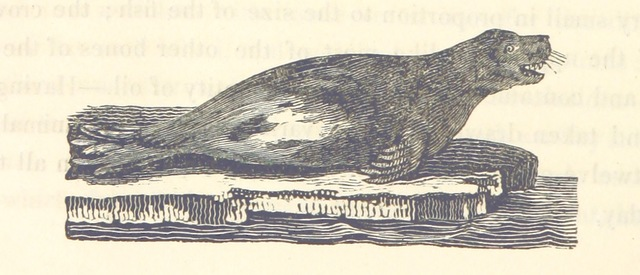 """Wildlife from """"Journal of a Voyage to Greenland, in the year 1821. With graphic illustrations"""""""