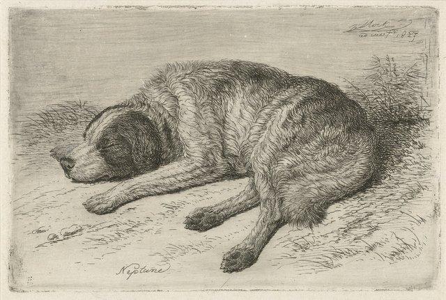 Slapende hond naar links