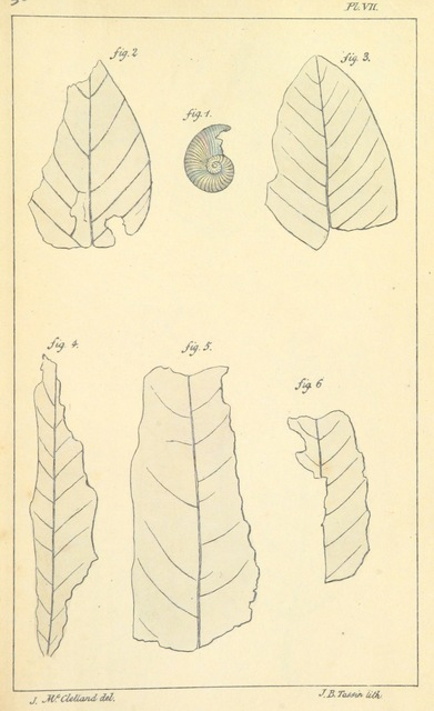 "flora from ""Some Inquiries in the Province of Kemaon, relative to Geology, and other branches of natural science"""
