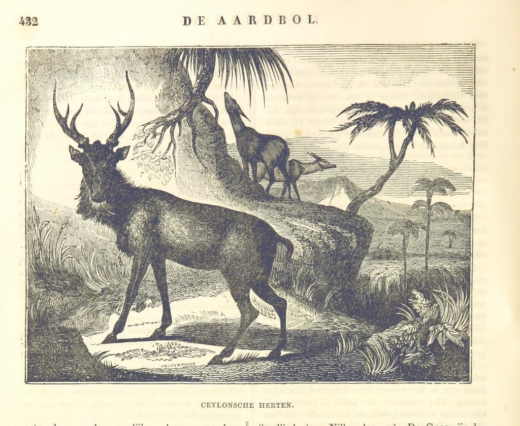"""fauna from """"De Aardbol. Magazijn van hedendaagsche land- en volkenkunde ... Met platen en kaarten. [Deel 4-9 by P. H. W.]"""""""