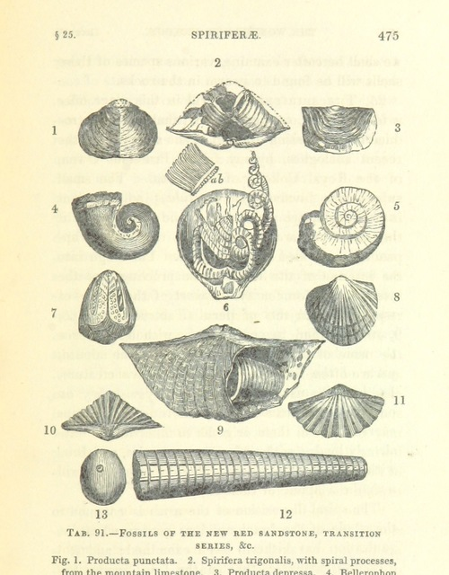 "fossils from ""[The Wonders of Geology; or, a familiar exposition of geological phenomena: being the substance of a course of lectures ... by G. M. ... from notes taken by G. F. Richardson.]"""