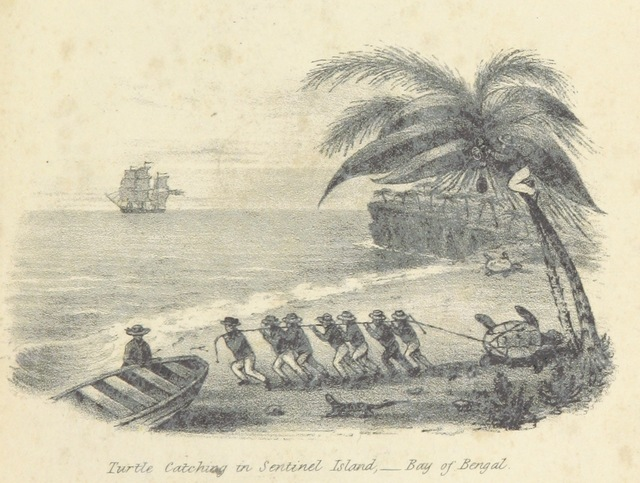"Sentinel Island from ""Reconnoitering Voyages and Travels, with adventures in the New Colonies of South Australia, ... including visits to the Nicobar and other islands of the Indian Seas, Calcutta, the Cape of Good Hope, and St. Helena, during the years 1836-38. Embellished by engravings"""