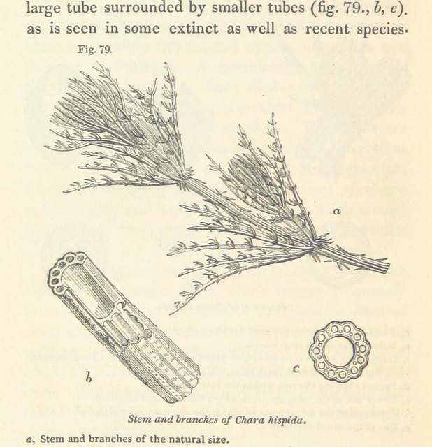 """flora from """"[Principles of Geology, being an attempt to explain the former changes of the earth's surface, by reference to causes now in operation.]"""""""