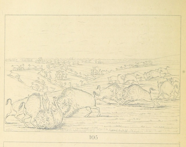"""fauna from """"Letters and Notes on the Manners, Customs, and Condition of the North American Indians. [With plates.]"""""""