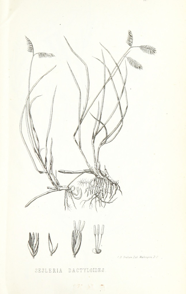 "flora from ""Notes of a military reconnaissance from Port Leavenworth in Missouri to San Diego, in California, including parts of the Arkansas, del Norte and Gila Rivers"""