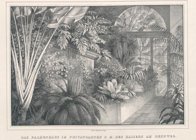 Das Palmenhaus im Privatgarten S. M. des Kaisers am Rennweg