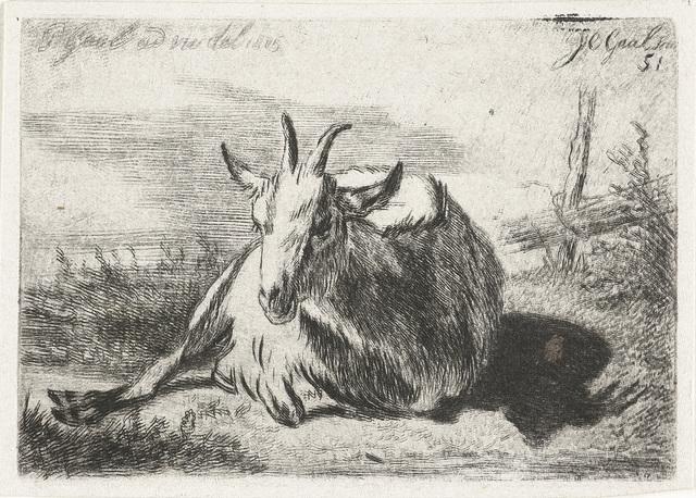 Liggende geit, naar links