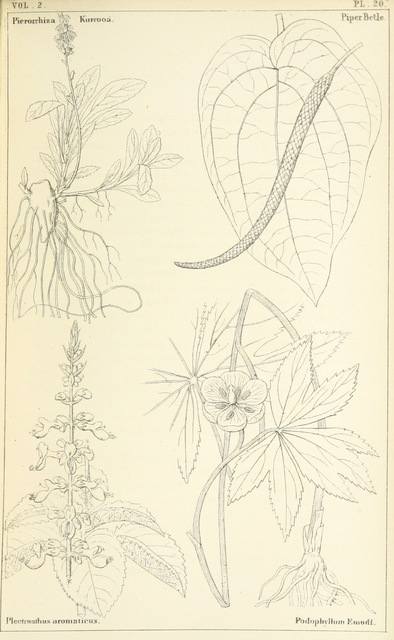 """flora from """"Thirty-five years in the East. Adventures, discoveries, experiments, and historical sketches, relating to the Punjab and Cashmere"""""""