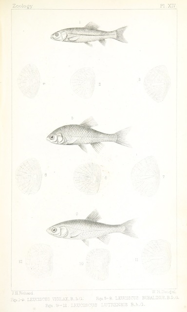 """fauna from """"Exploration of the Red River of Louisiana, in ... 1852: by R. B. Marcy ... assisted by G. B. McClellan ... With reports on the natural history of the country, and ... illustrations"""""""