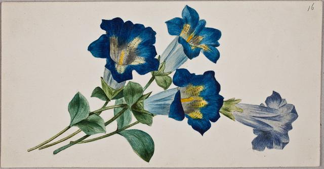 Albuminscriptie / van Willem Johannes Leijds (1828-1865) (huwde op 3 sept. 1856 met Trijntje van Beuningen van Helsdingen), voor Anna Elisabeth ('Annabeth') Otto