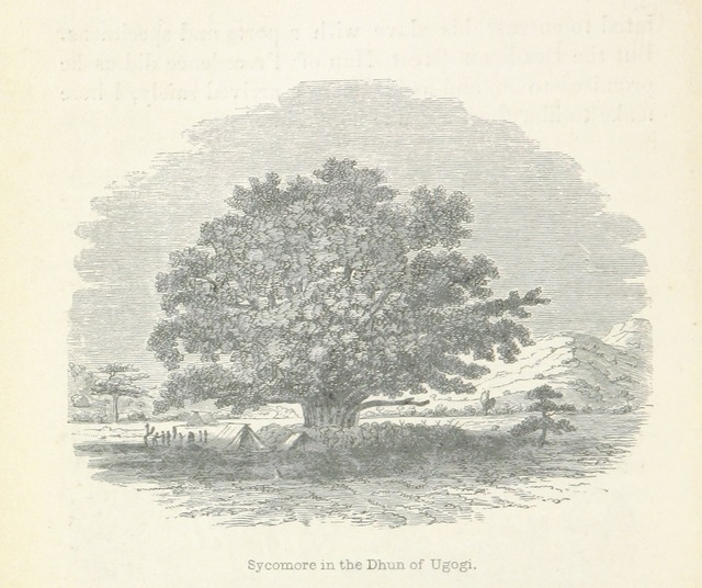 """flora from """"The Lake Regions of Central Africa. A picture of exploration. [With plates.]"""""""