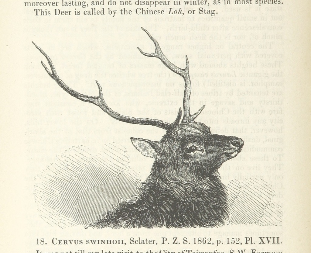 "Formosan sambar deer from ""On the Mammals of the Island of Formosa (China). [With coloured plates. From the Proceedings of the Zoological Society of London, December 9, 1862.]"""