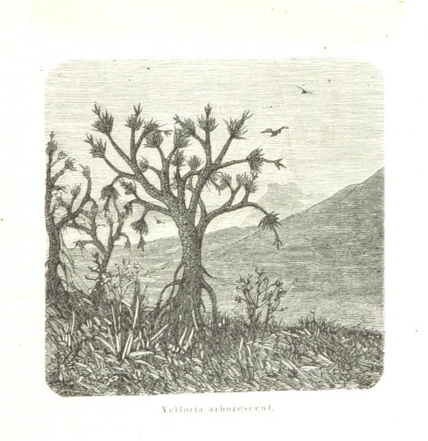 """wildlife from """"L'Espace céleste et la nature tropicale, description physique de l'univers ... préface de M. Babinet, dessins de Yan' Dargent"""""""