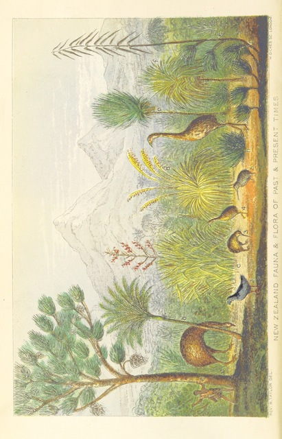 """kiwi from """"Te Ika a Maui, or, New Zealand and its Inhabitants ... Second edition, etc"""""""