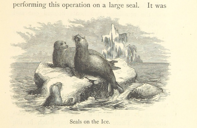 """seals from """"A Whaling Cruise to Baffin's Bay and the Gulf of Boothia. And an account of the rescue of the crew of the """"Polaris."""" ... With an introduction by ... S. Osborn, etc"""""""