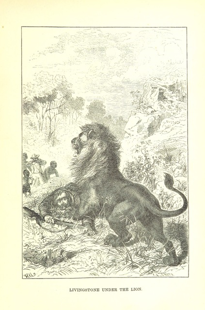 """lion from """"Africa: the history of exploration and adventure, as given in the leading authorities from Herodotus to Livingstone. ... With ... illustrations"""""""