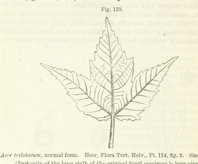"flora from ""[The Student's Elements of Geology ... With ... illustrations.]"""