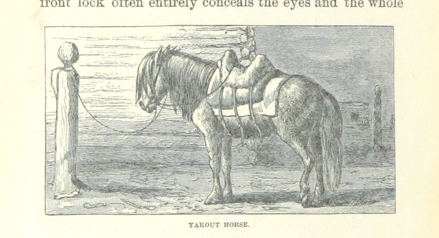 """horse from """"Ice-Pack and Tundra: an account of the search for the Jeannette and a sledge journey through Siberia ... With maps and illustrations"""""""