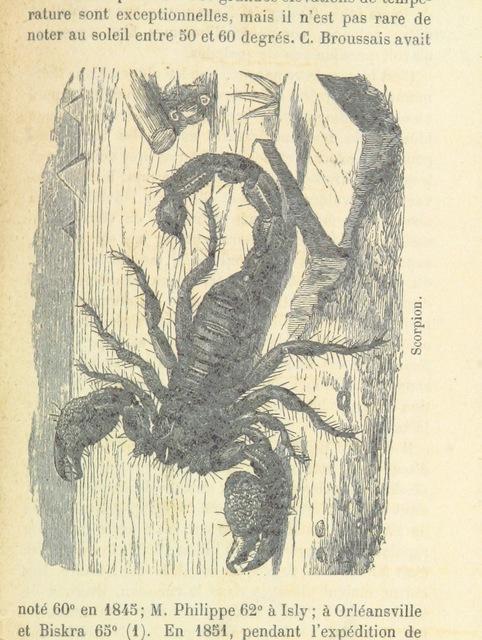 """wildlife from """"L'Algérie ... Ouvrage illustré, etc"""""""