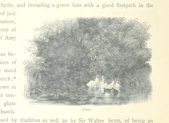 """Coots from """"The Thames from its Source to the Sea ... Illustrated with ... engravings ... and ... etchings, etc"""""""