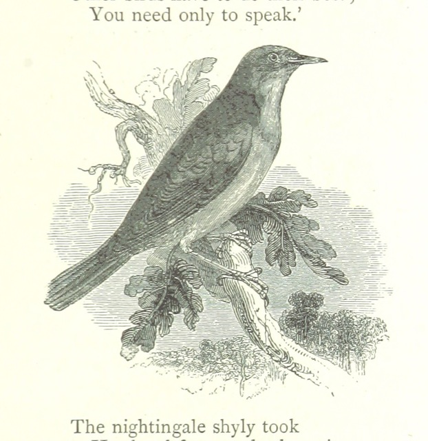 """nightingale from """"The Child's Book of Poetry. A selection of poems, ballads and hymns"""""""