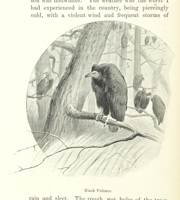 """wildlife from """"Idle Days in Patagonia ... Illustrated by A. Hartley and J. Smit"""""""